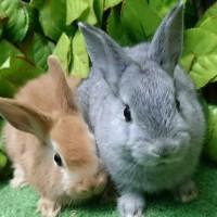 移動動物園のウサギ